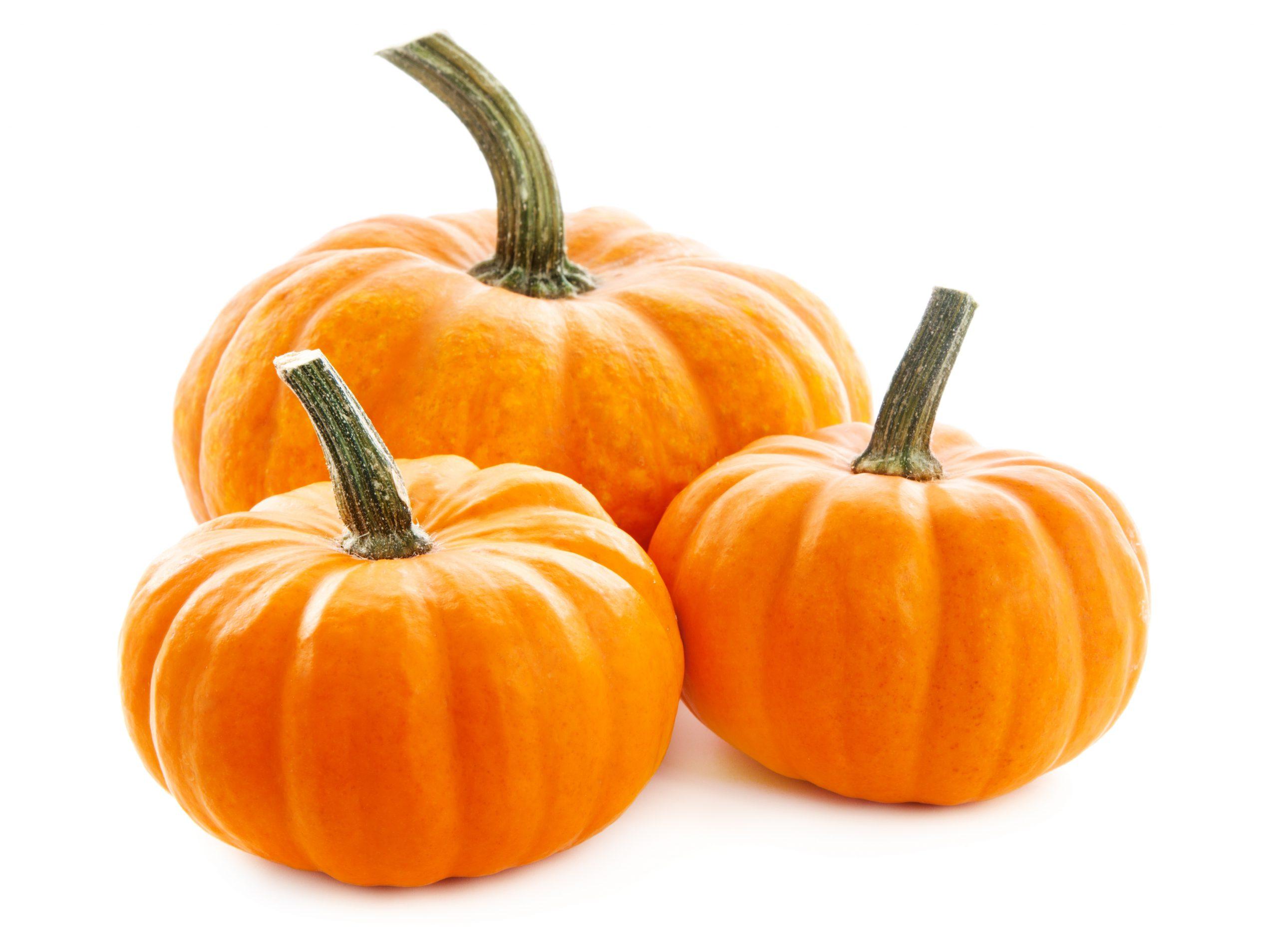 Pumpkin Protein Powder (โปรตีนจากผงฟักทอง)