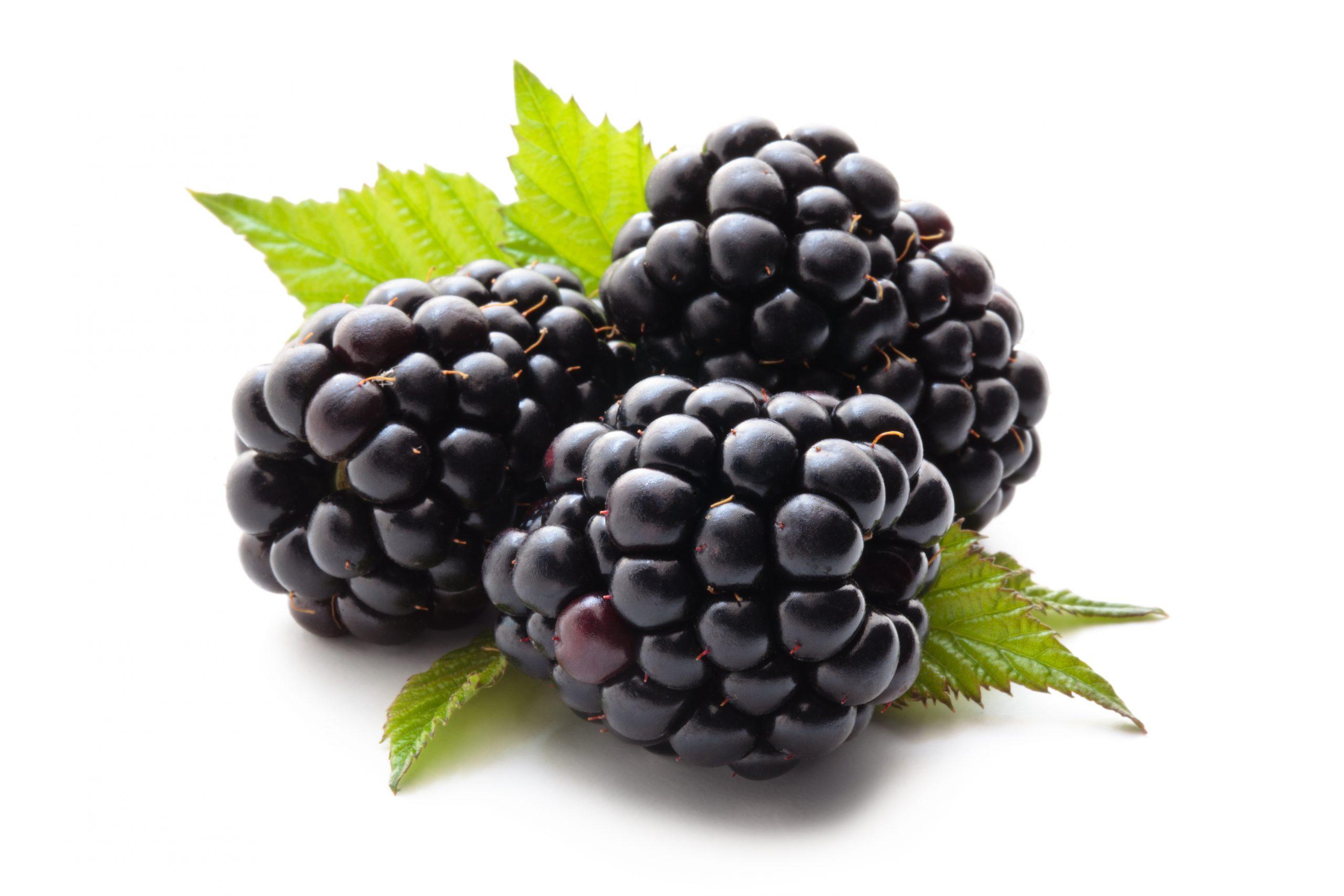 Blackberry (แบล็คเบอร์รี่)